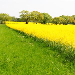 Natural Farming Environment