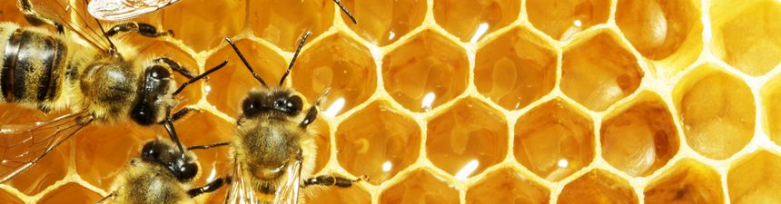 Local Honey – What's the Buzz about?