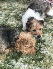 farm dogs on green carpet