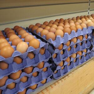 eggs bake off